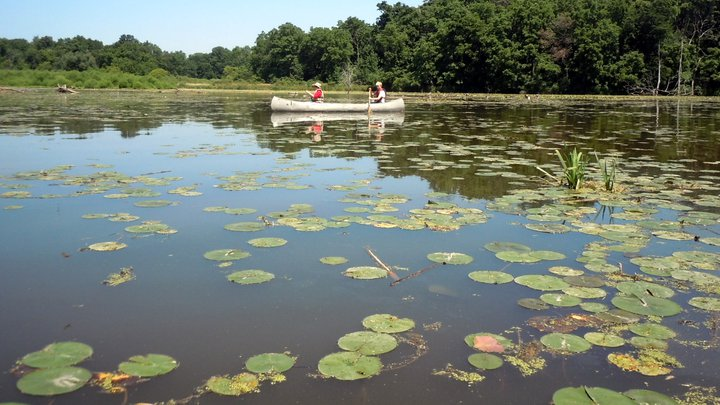 Midwestern fishing prime spots in illinois for Fishing lakes in illinois